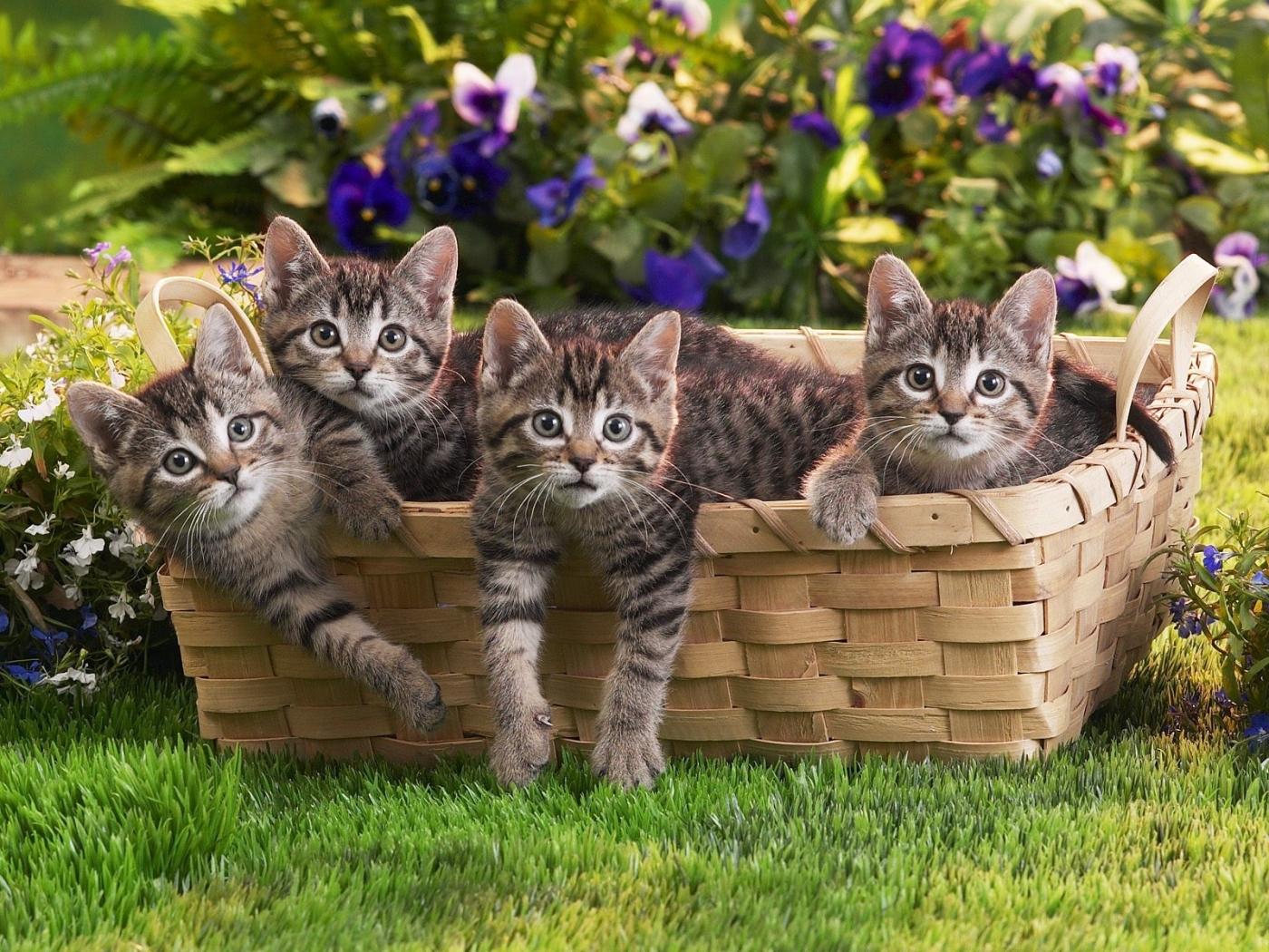 24592 Заставки и Обои Кошки (Коты, Котики) на телефон. Скачать Животные, Кошки (Коты, Котики) картинки бесплатно