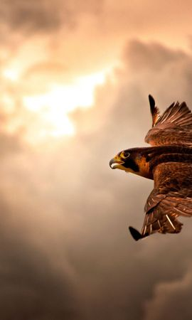 89415 download wallpaper Animals, Bird, Hawk, Sky, Clouds, Mainly Cloudy, Overcast screensavers and pictures for free
