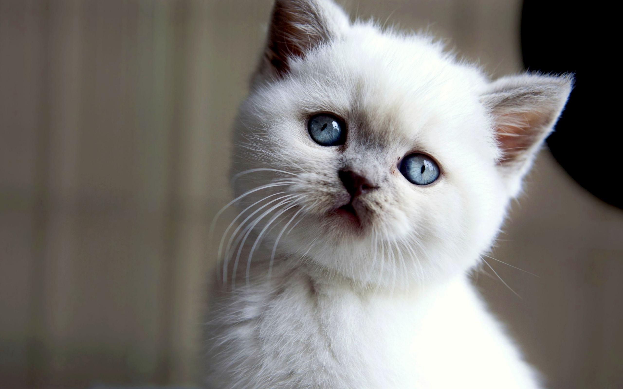 23792 скачать обои Животные, Кошки (Коты, Котики) - заставки и картинки бесплатно