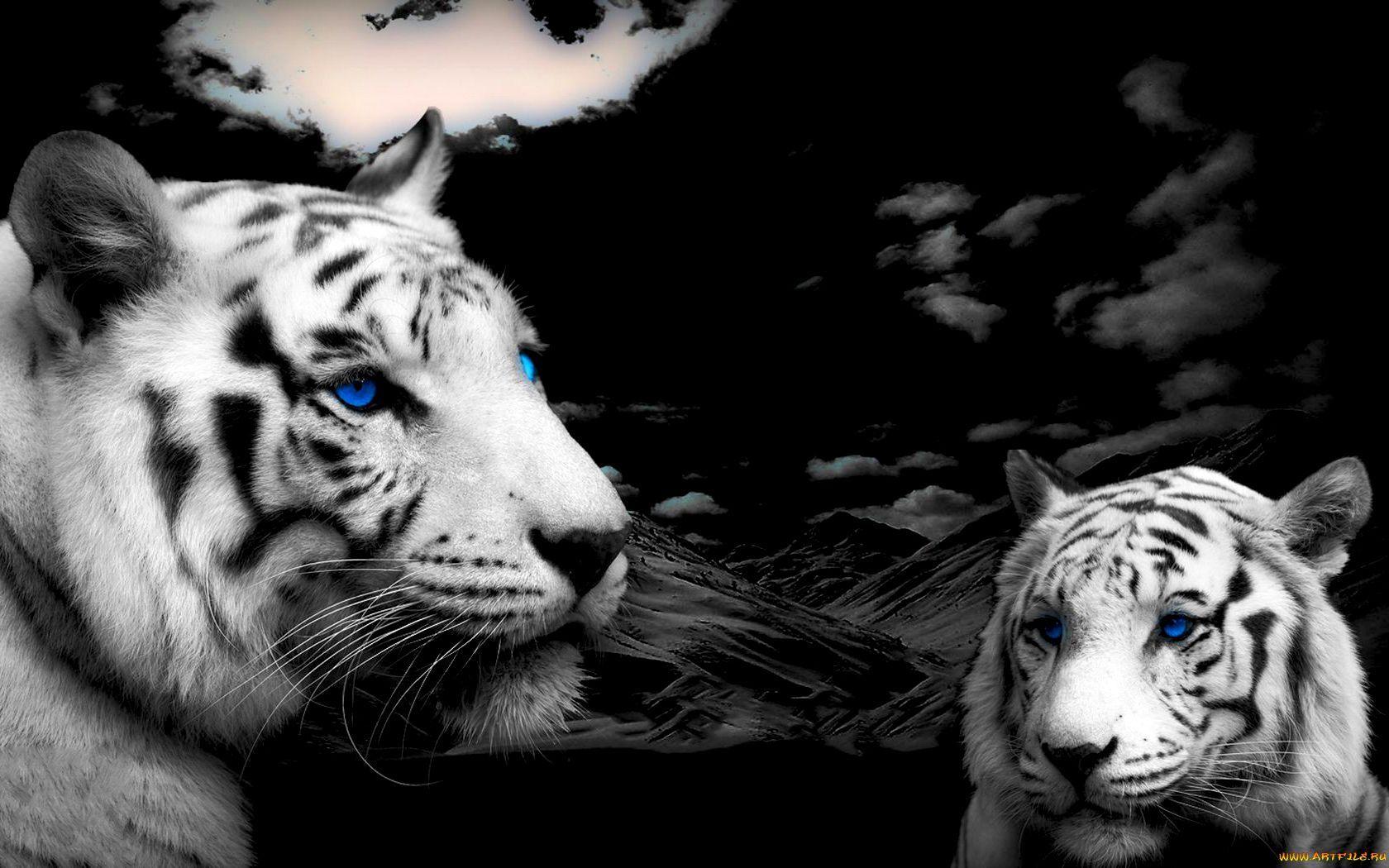 25254 Заставки и Обои Тигры на телефон. Скачать Животные, Тигры картинки бесплатно