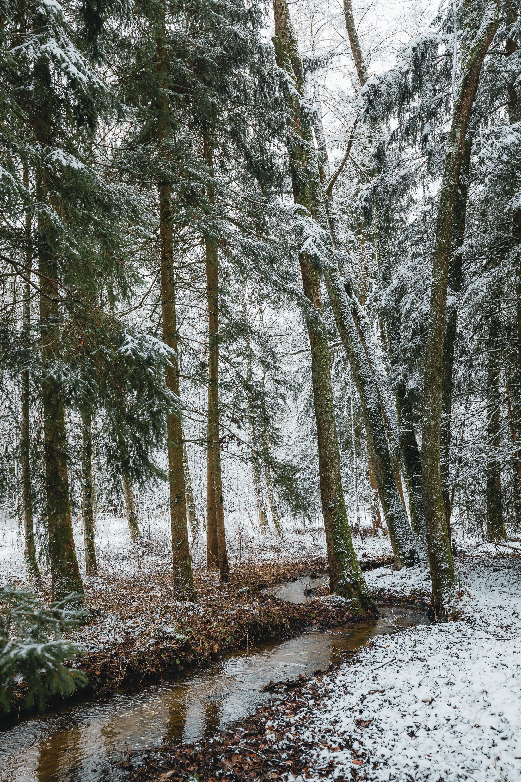 105514 скачать обои Природа, Ручей, Лес, Деревья, Снег, Зима, Сосны - заставки и картинки бесплатно