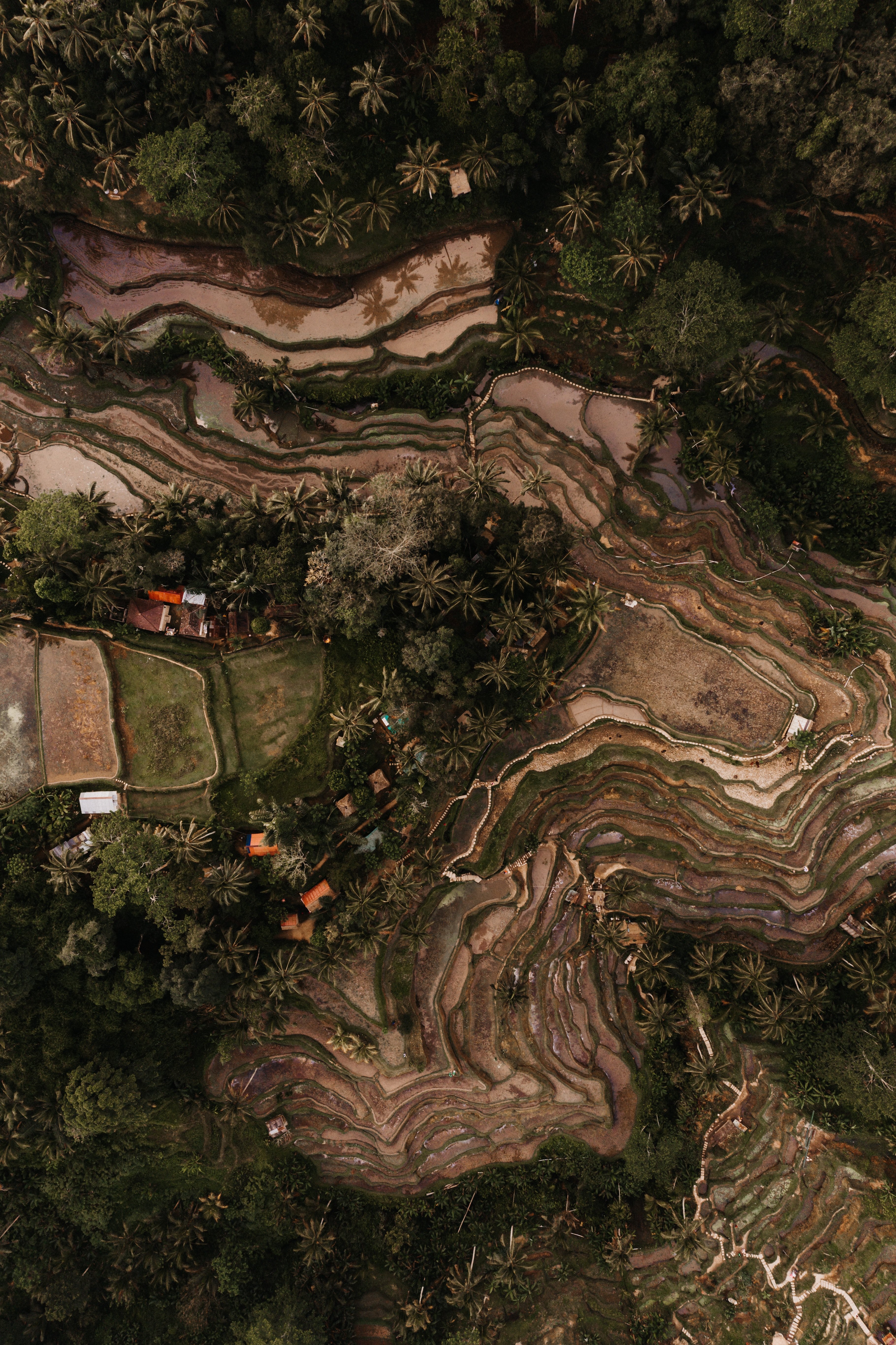 114948 download wallpaper Nature, View From Above, Relief, Tropics, Plantation, Rice Fields, Plantations screensavers and pictures for free