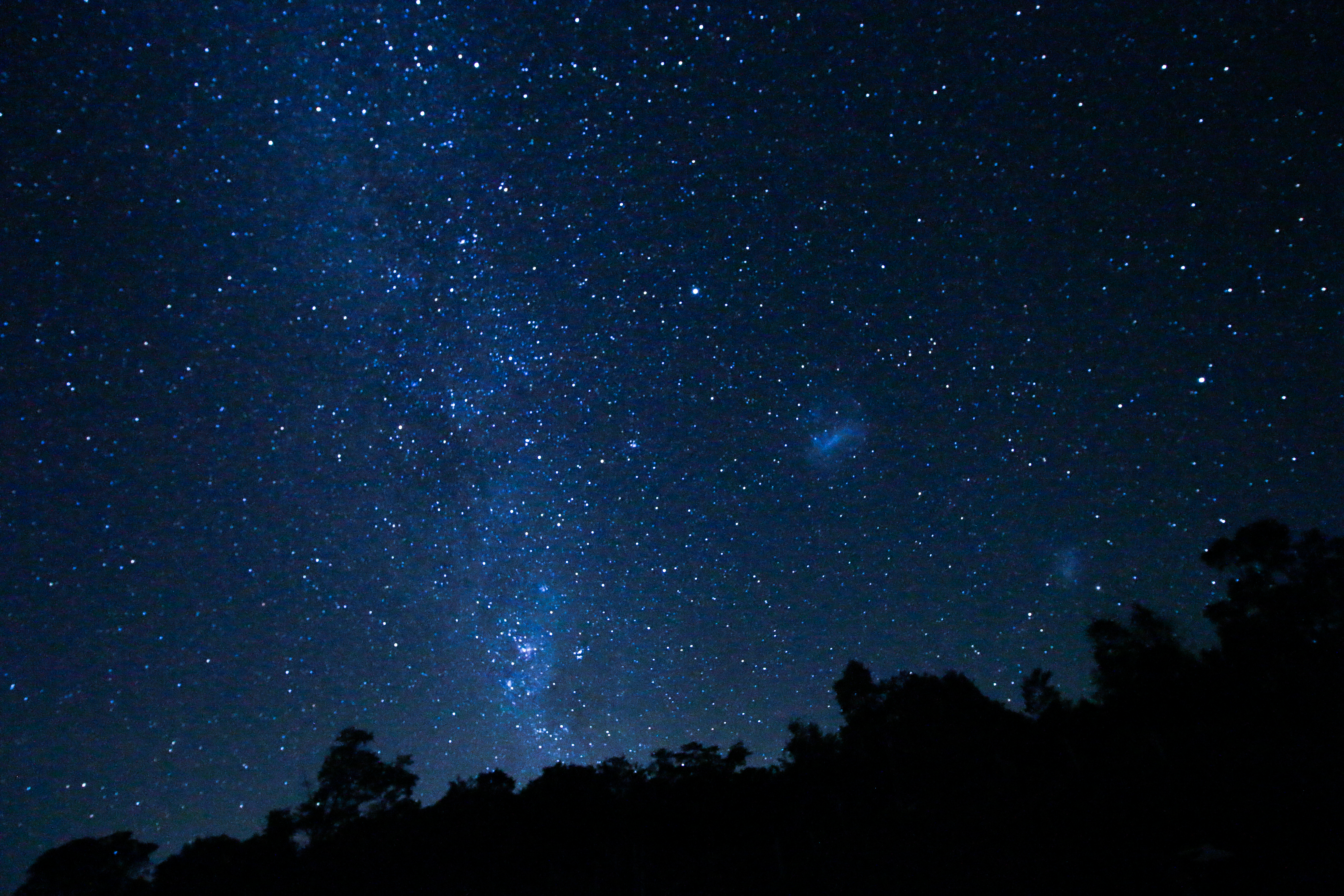 156089 download wallpaper Dark, Universe, Starry Sky, Trees, Stars screensavers and pictures for free