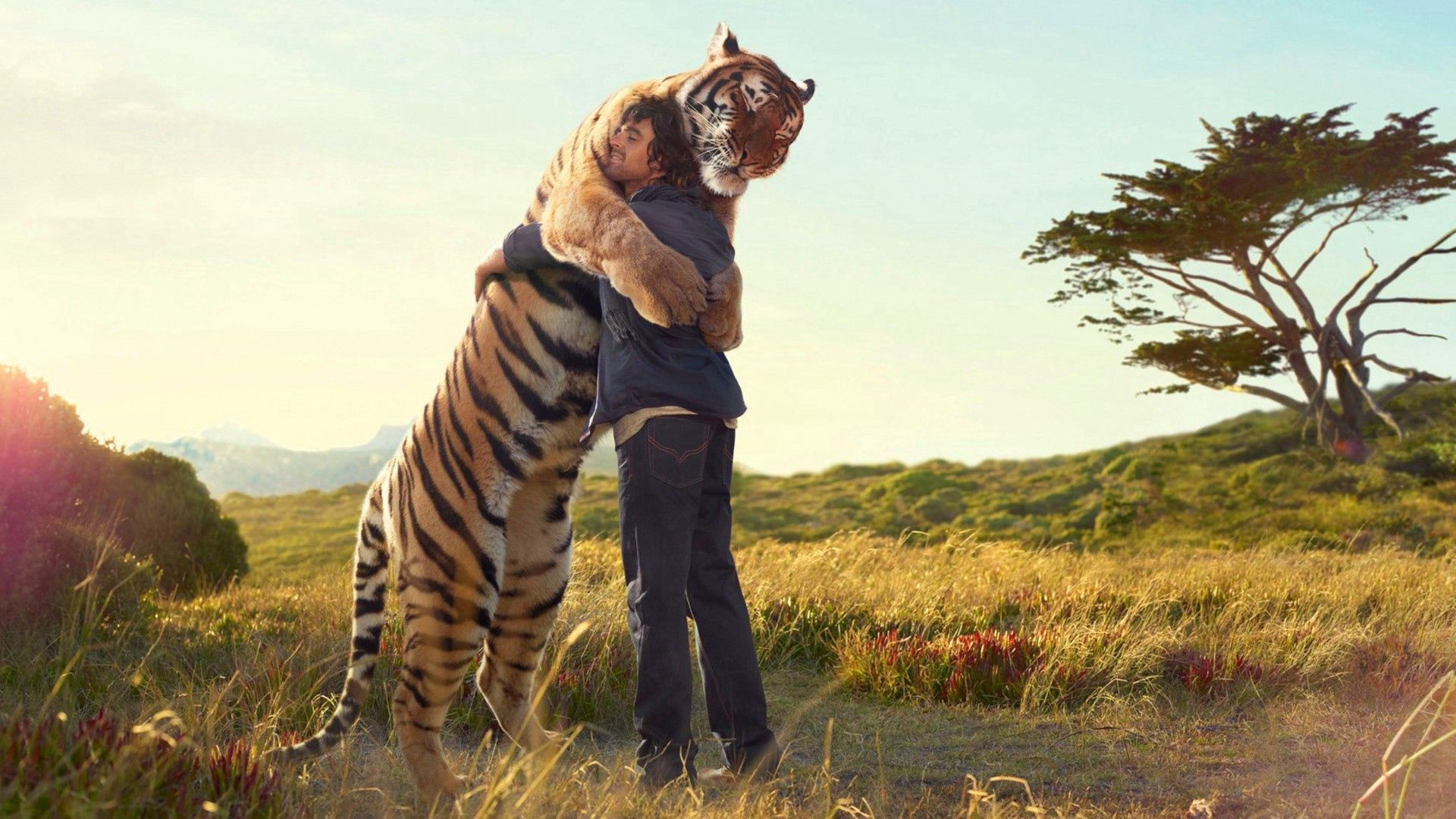 139142 Screensavers and Wallpapers Tiger for phone. Download Miscellanea, Miscellaneous, Tiger, Guy, Embrace, Situation, Meeting pictures for free