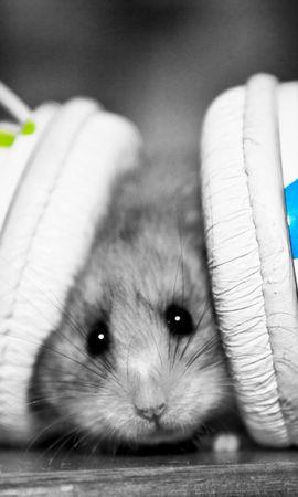 22589 baixar papel de parede Engraçado, Música, Animais, Hamsters, Fones De Ouvido - protetores de tela e imagens gratuitamente
