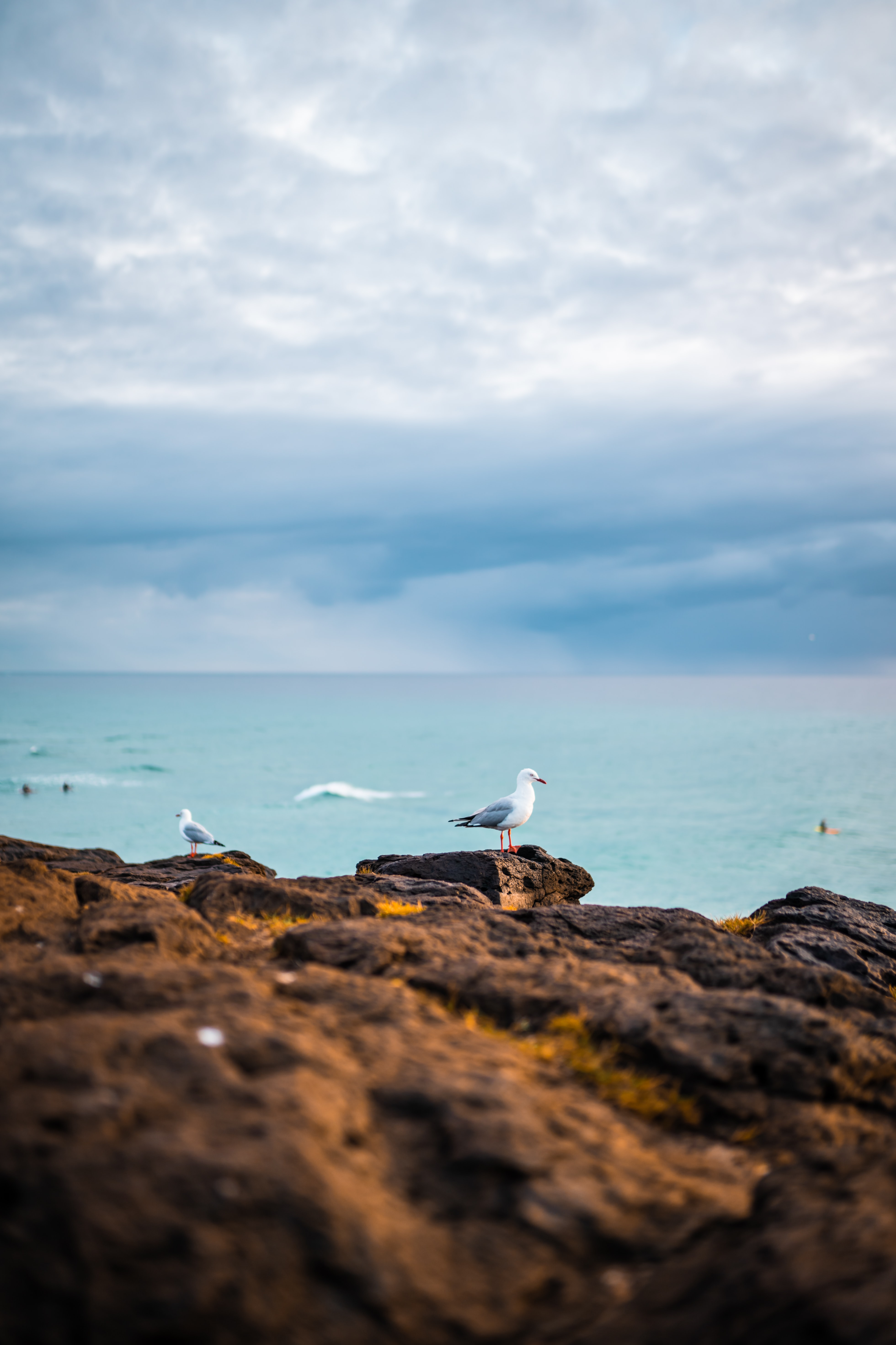121368 download wallpaper Animals, Rocks, Sea, Birds, Seagulls screensavers and pictures for free