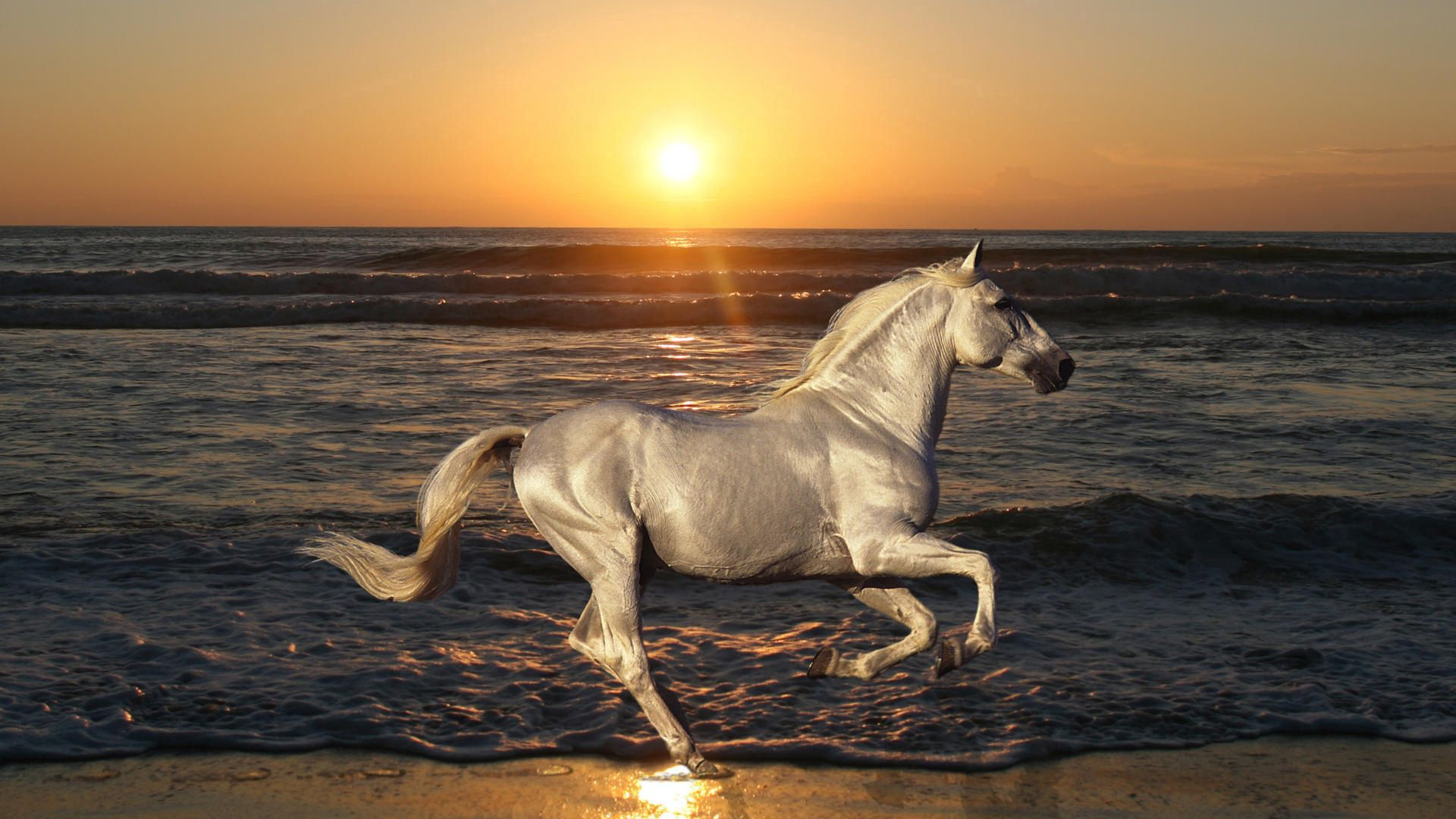 103347 download wallpaper Animals, Nature, Stallion, Horse, Rides, Jumps, Sea screensavers and pictures for free