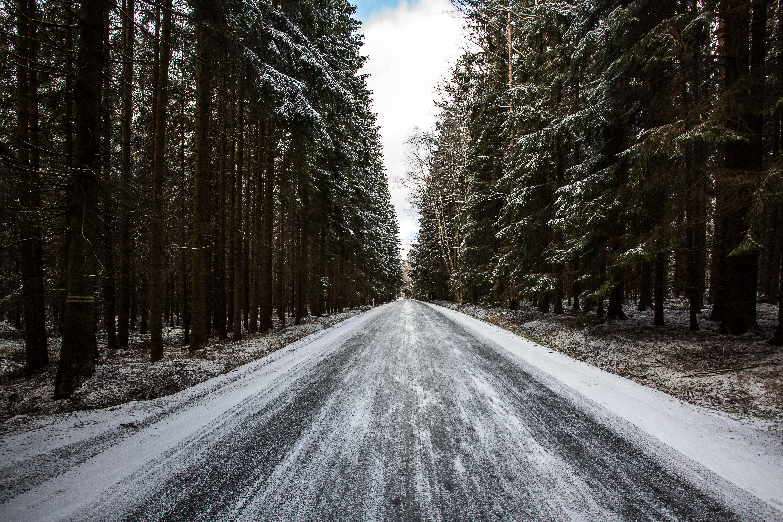 113496 скачать обои Природа, Дорога, Лес, Снег, Деревья, Зима, Сосны - заставки и картинки бесплатно