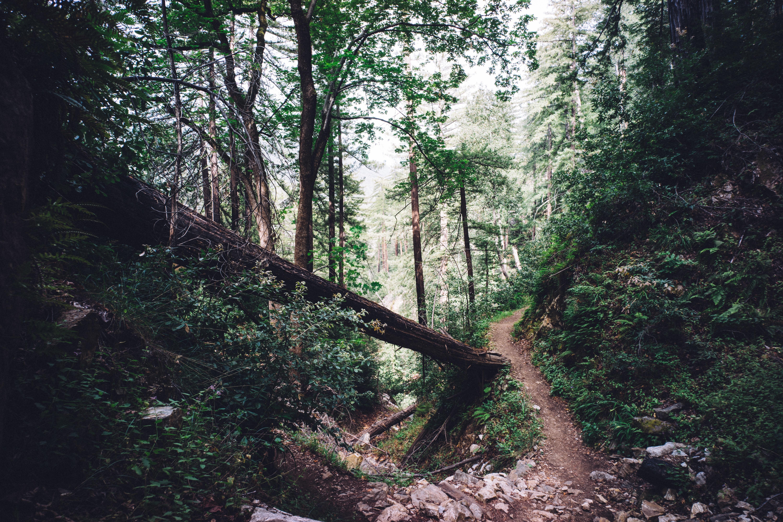 95173 papel de parede 480x800 em seu telefone gratuitamente, baixe imagens Natureza, Árvores, Caminho, Floresta 480x800 em seu celular