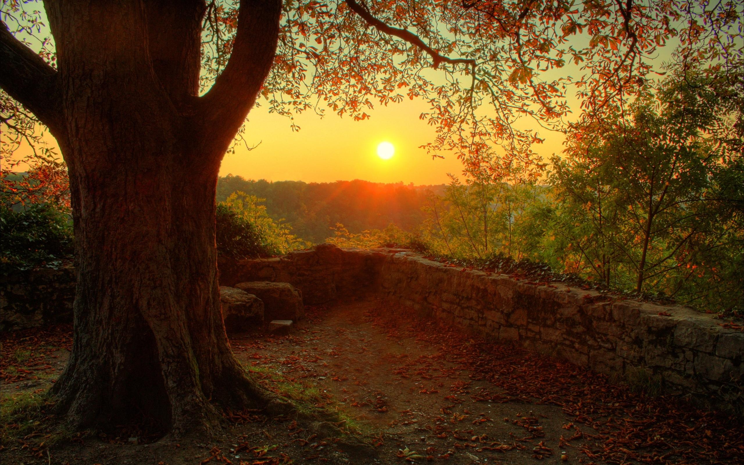 3468 скачать обои Пейзаж, Деревья, Закат, Солнце - заставки и картинки бесплатно