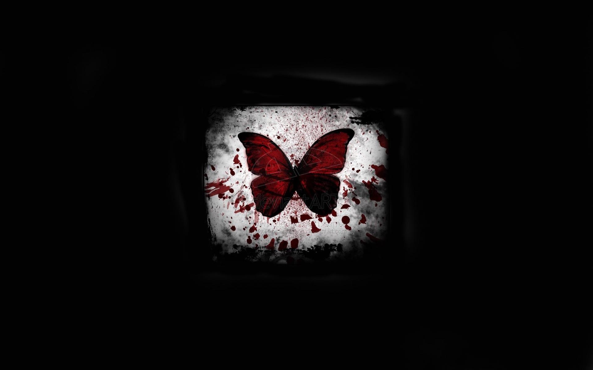 27685 скачать обои Бабочки, Насекомые, Фон - заставки и картинки бесплатно