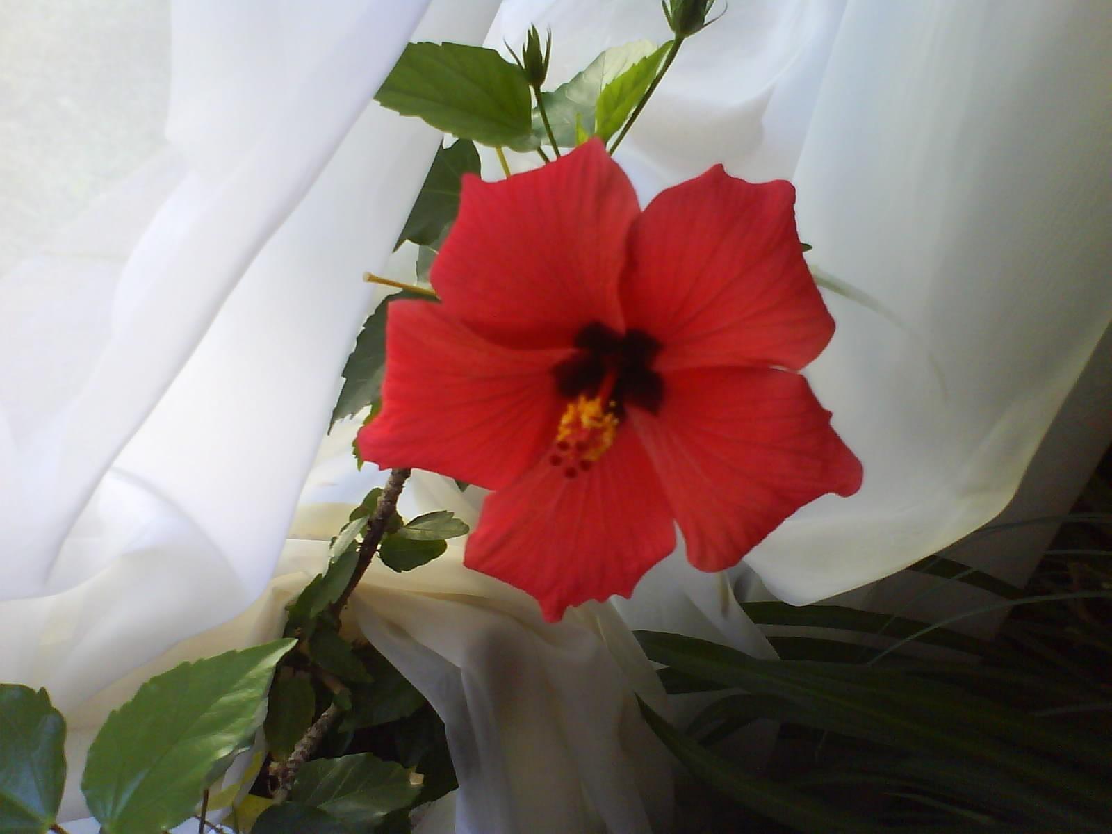 7585 скачать обои Растения, Цветы - заставки и картинки бесплатно
