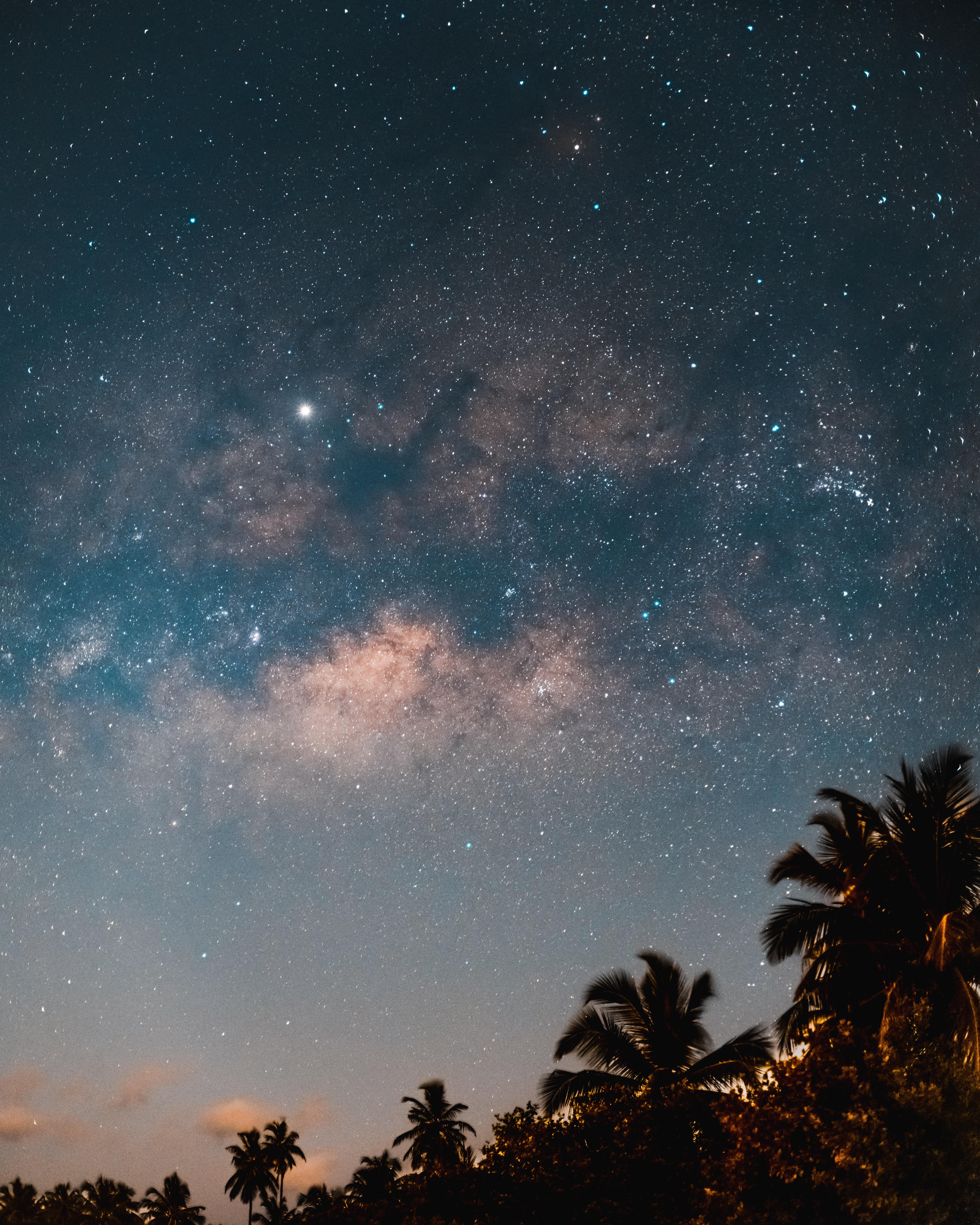 免費壁紙154103:黑暗的, 黑暗, 星空, 夜, 树, 棕榈 下載手機圖片
