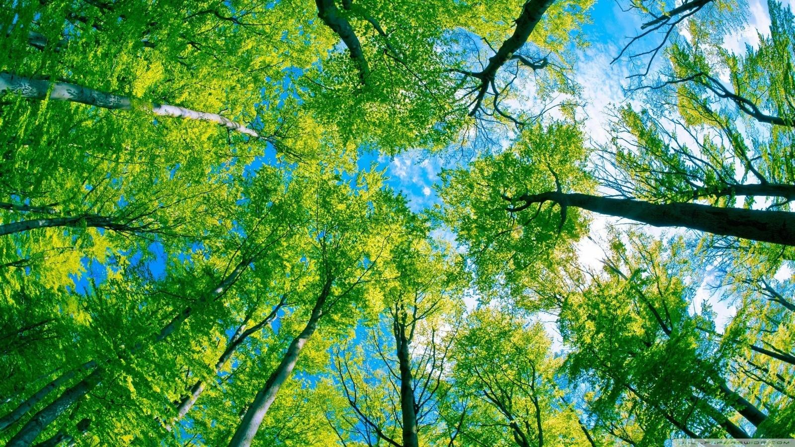 18485 скачать обои Пейзаж, Деревья, Небо - заставки и картинки бесплатно