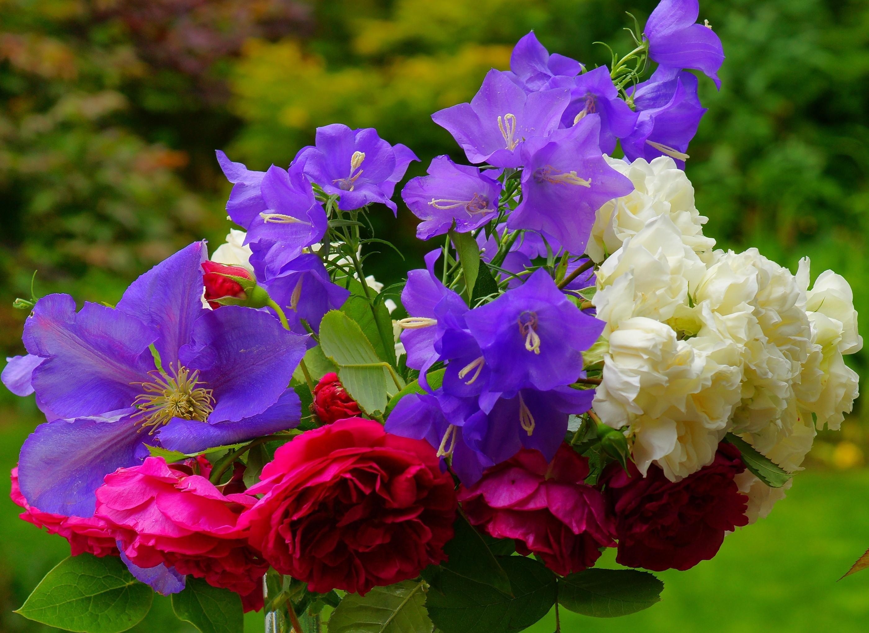 147936 скачать обои Цветы, Клематис, Колокольчики, Букет, Размытость, Розы - заставки и картинки бесплатно