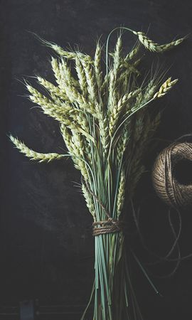 142534 скачать обои Разное, Колосья, Стебли, Макро, Пшеница - заставки и картинки бесплатно