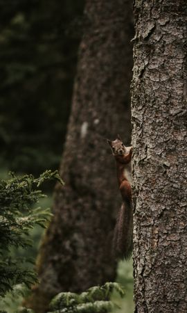 110476 download wallpaper Animals, Squirrel, Rodent, Funny, Wood, Tree screensavers and pictures for free