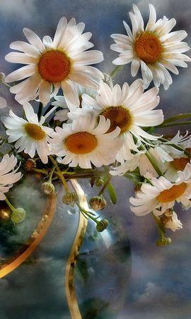 26628 скачать обои Растения, Цветы, Фон, Ромашки - заставки и картинки бесплатно