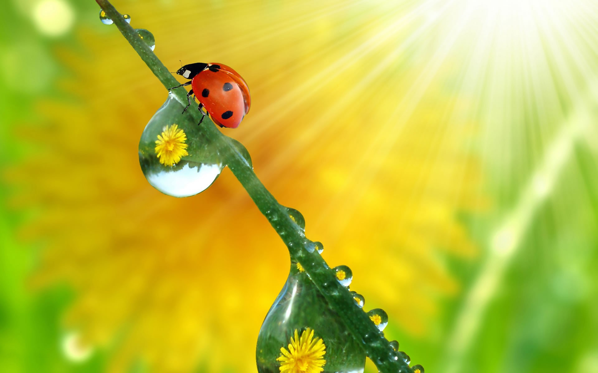 37800 download wallpaper Insects, Ladybugs screensavers and pictures for free