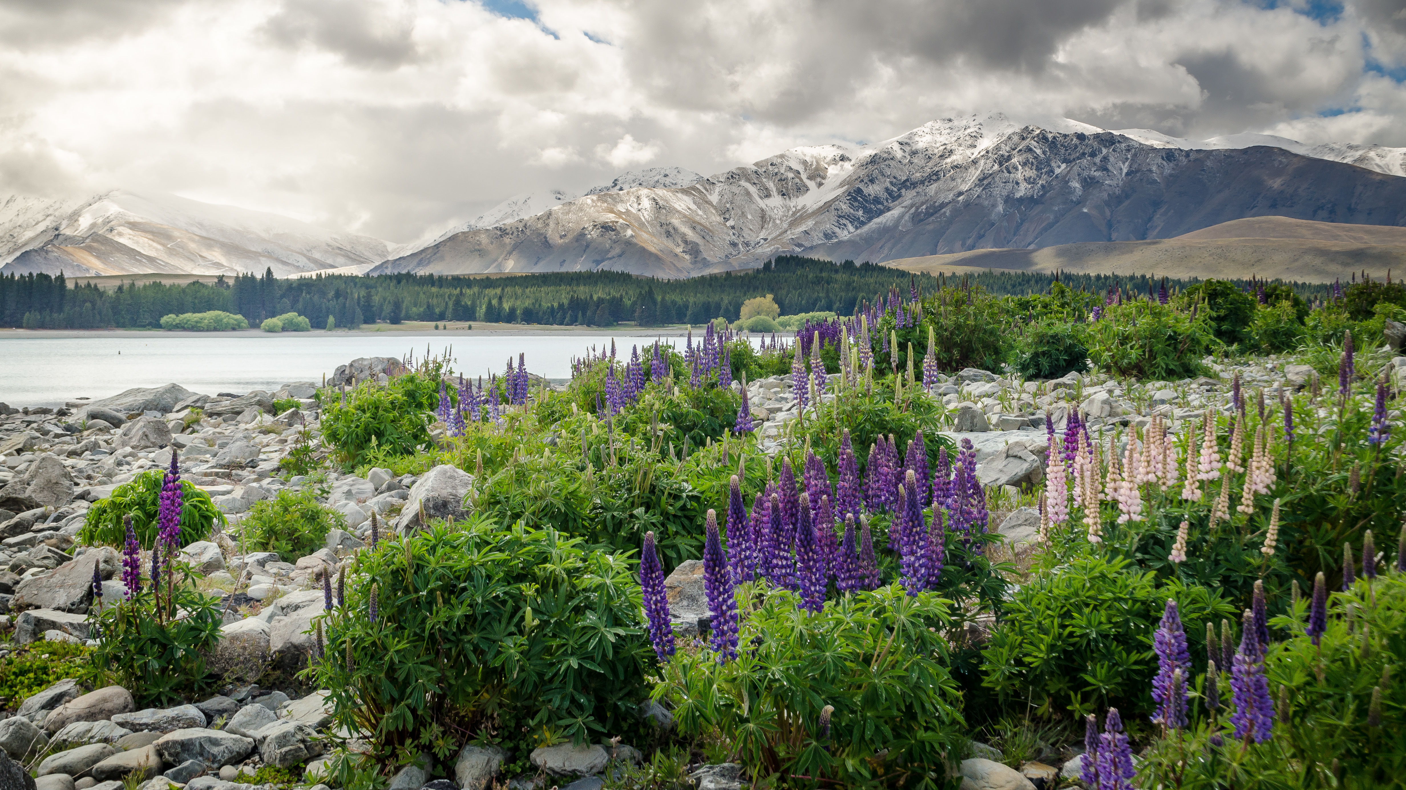 84526 Screensavers and Wallpapers New Zealand for phone. Download Nature, Flowers, Mountains, Lake, New Zealand pictures for free