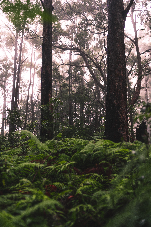 87509 Hintergrundbild herunterladen Natur, Bäume, Grass, Farne, Wald - Bildschirmschoner und Bilder kostenlos