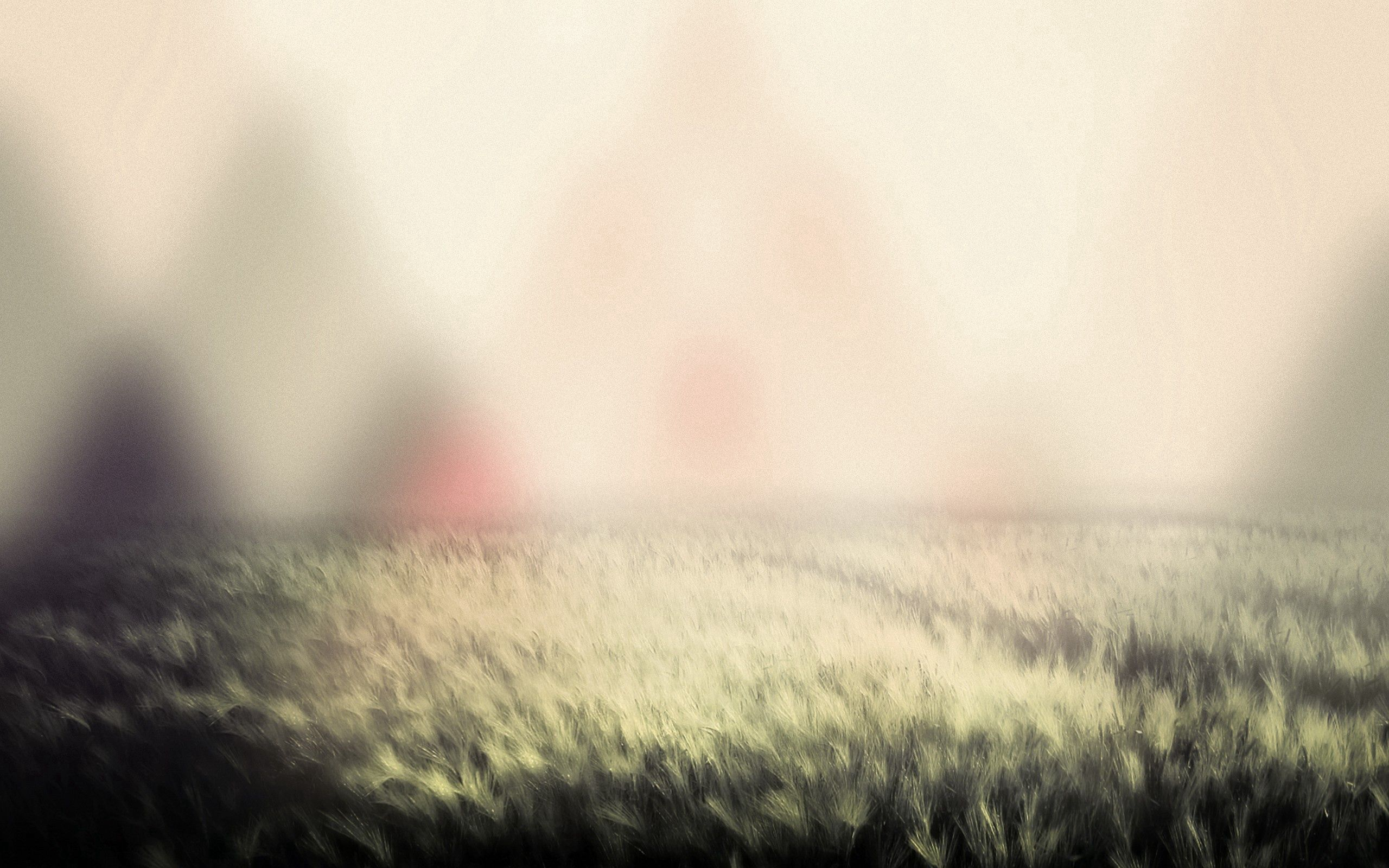 102986 скачать обои Макро, Трава, Свет, Туман - заставки и картинки бесплатно