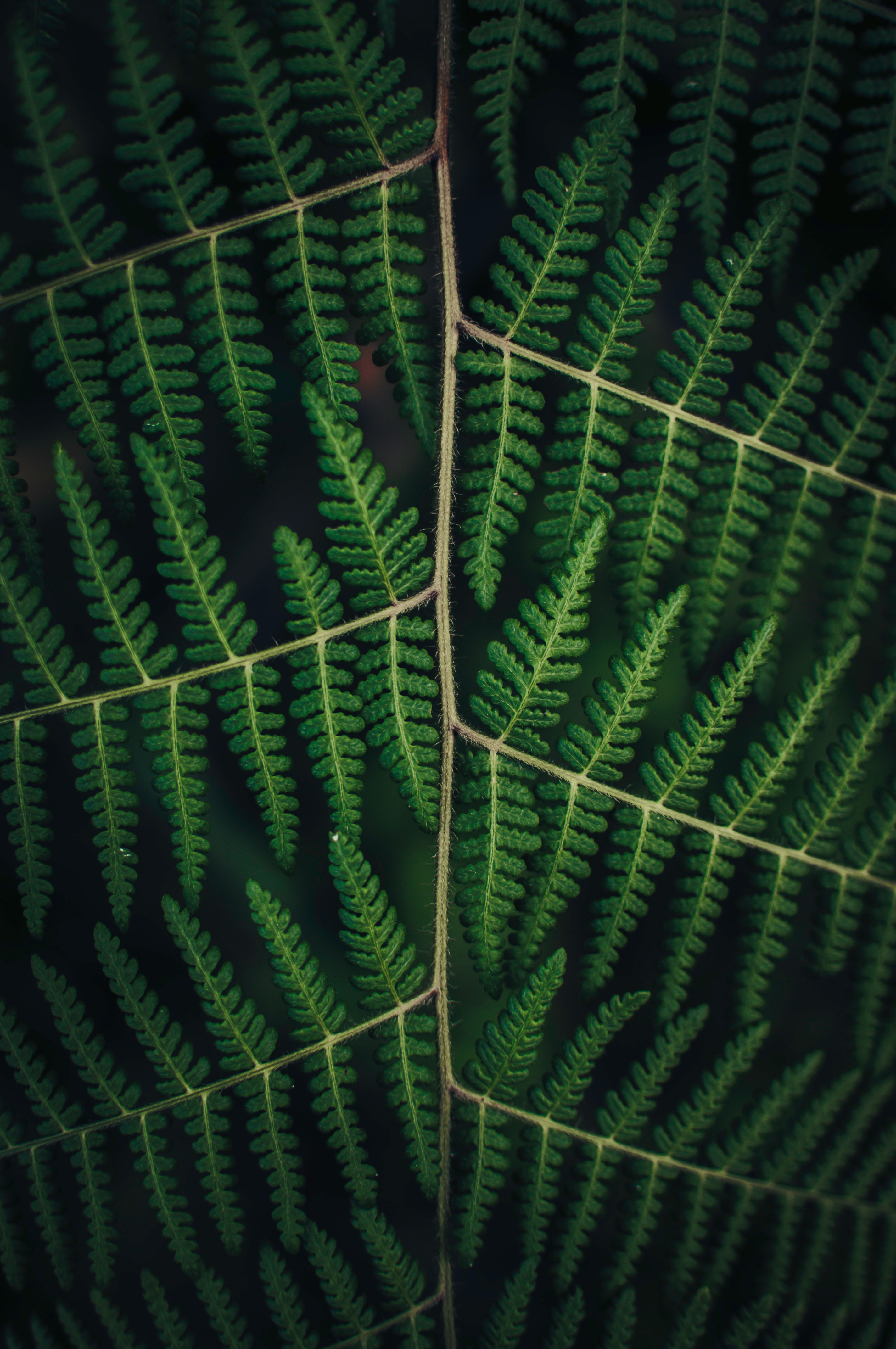 75655 download wallpaper Leaves, Plant, Macro, Fern, Carved screensavers and pictures for free