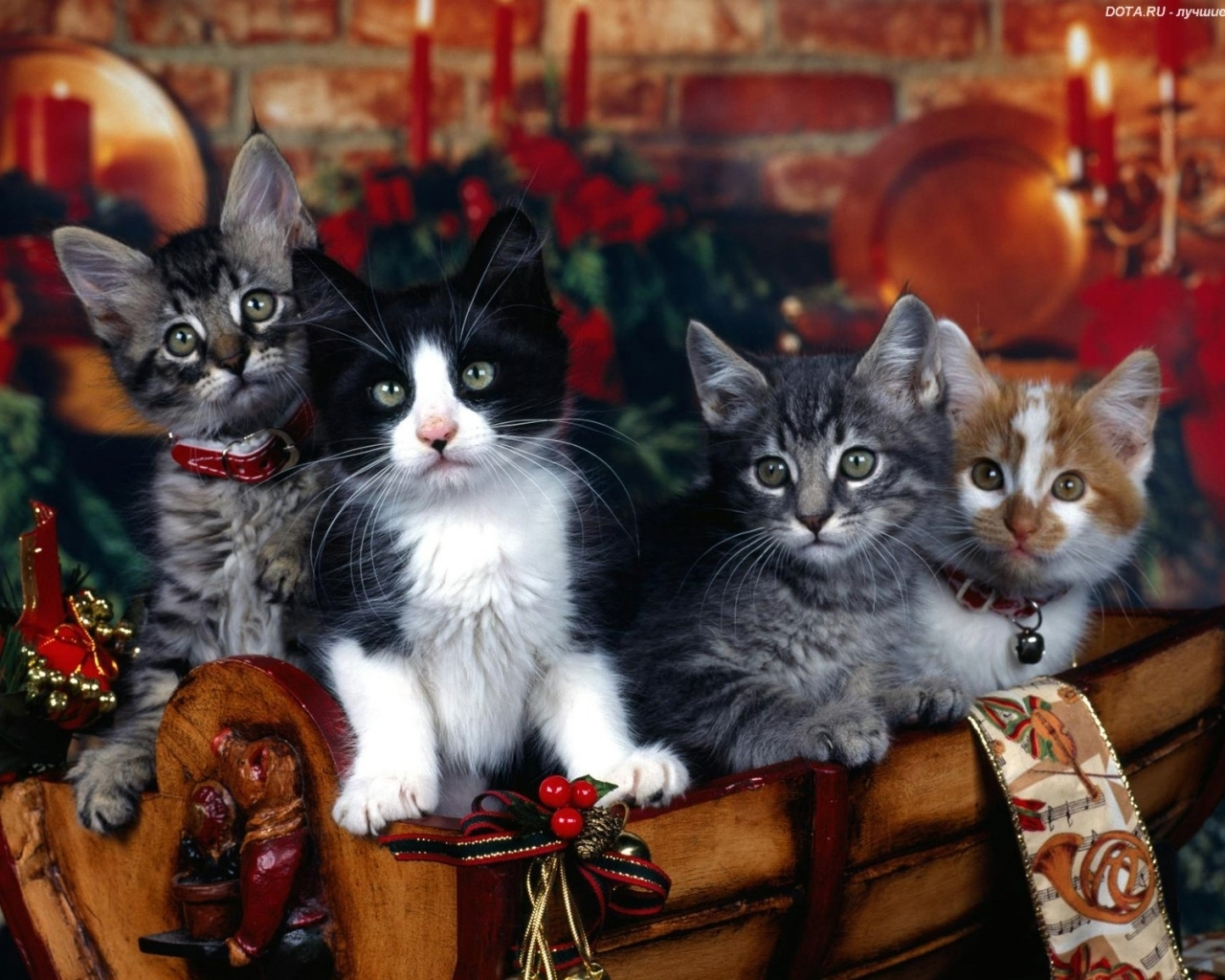 1184 download wallpaper Animals, Cats screensavers and pictures for free