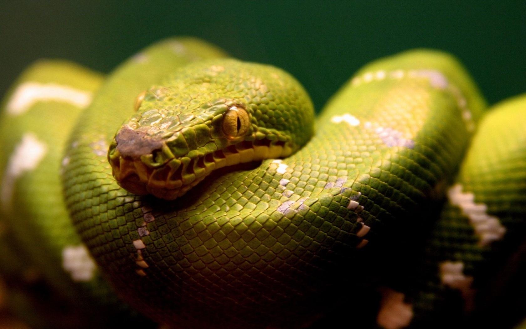 18584 скачать обои Животные, Змеи - заставки и картинки бесплатно