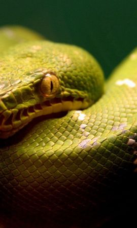 18584 download wallpaper Animals, Snakes screensavers and pictures for free