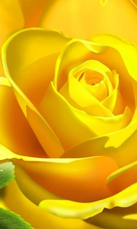 2034 завантажити шпалери Рослини, Квіти, Рози, Малюнки - заставки і картинки безкоштовно