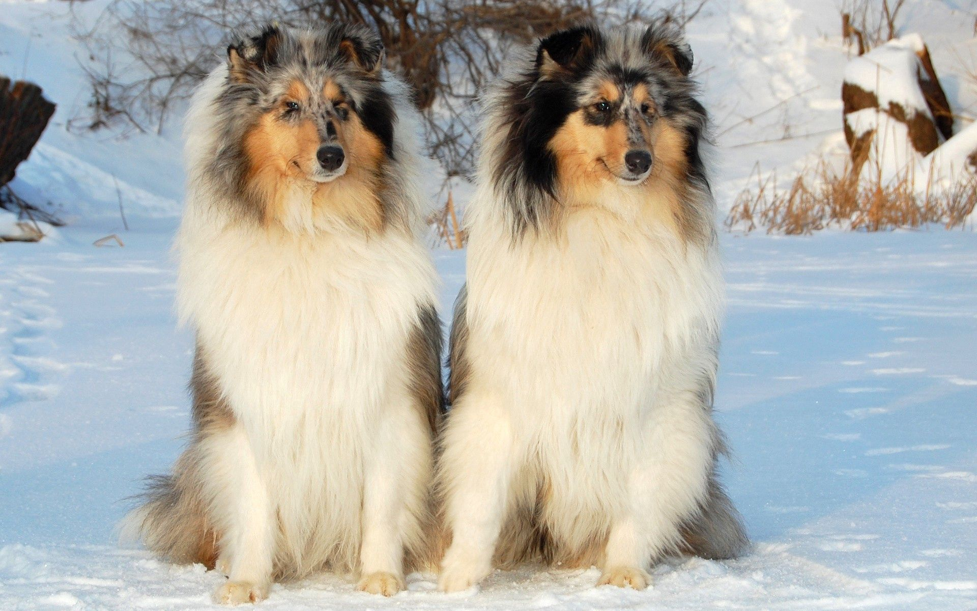 133203 download wallpaper Animals, Dogs, Couple, Pair, Snow, Sit screensavers and pictures for free