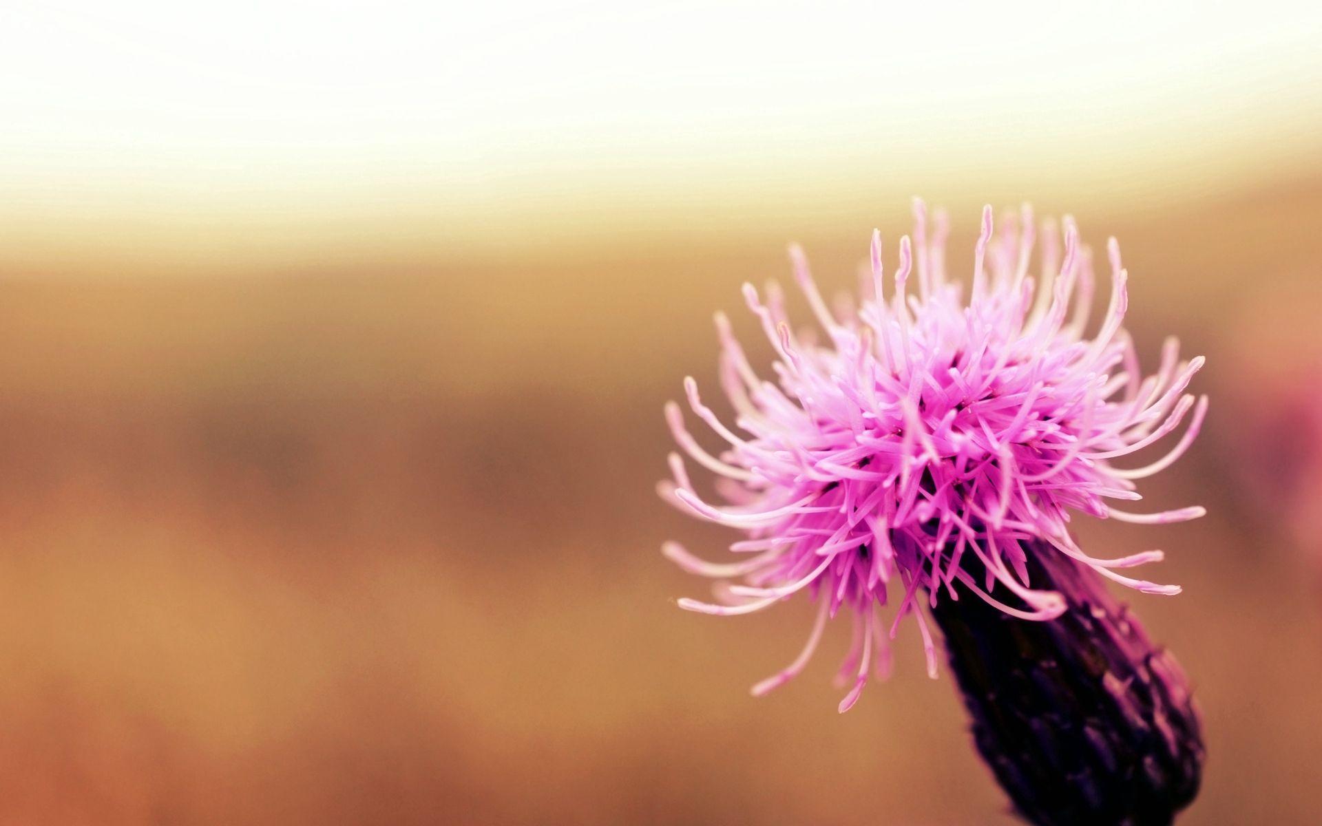86261 скачать обои Макро, Цветок, Растение, Свет, Фон - заставки и картинки бесплатно