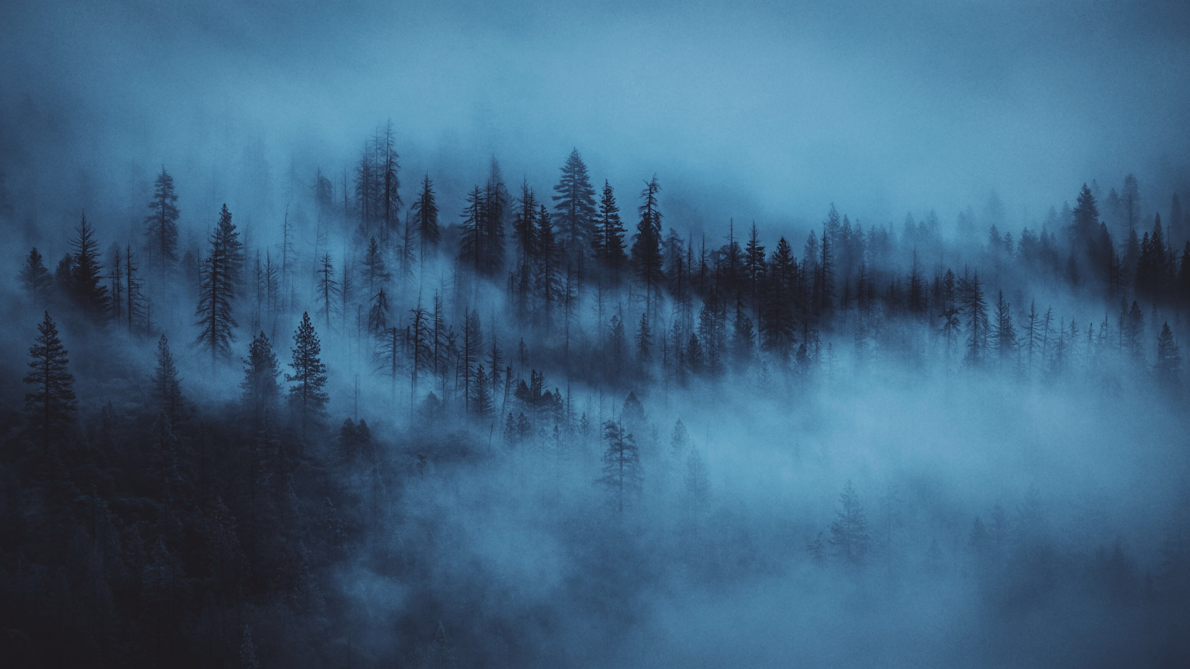 60870 download wallpaper Trees, Nature, Dawn, Forest, Fog screensavers and pictures for free