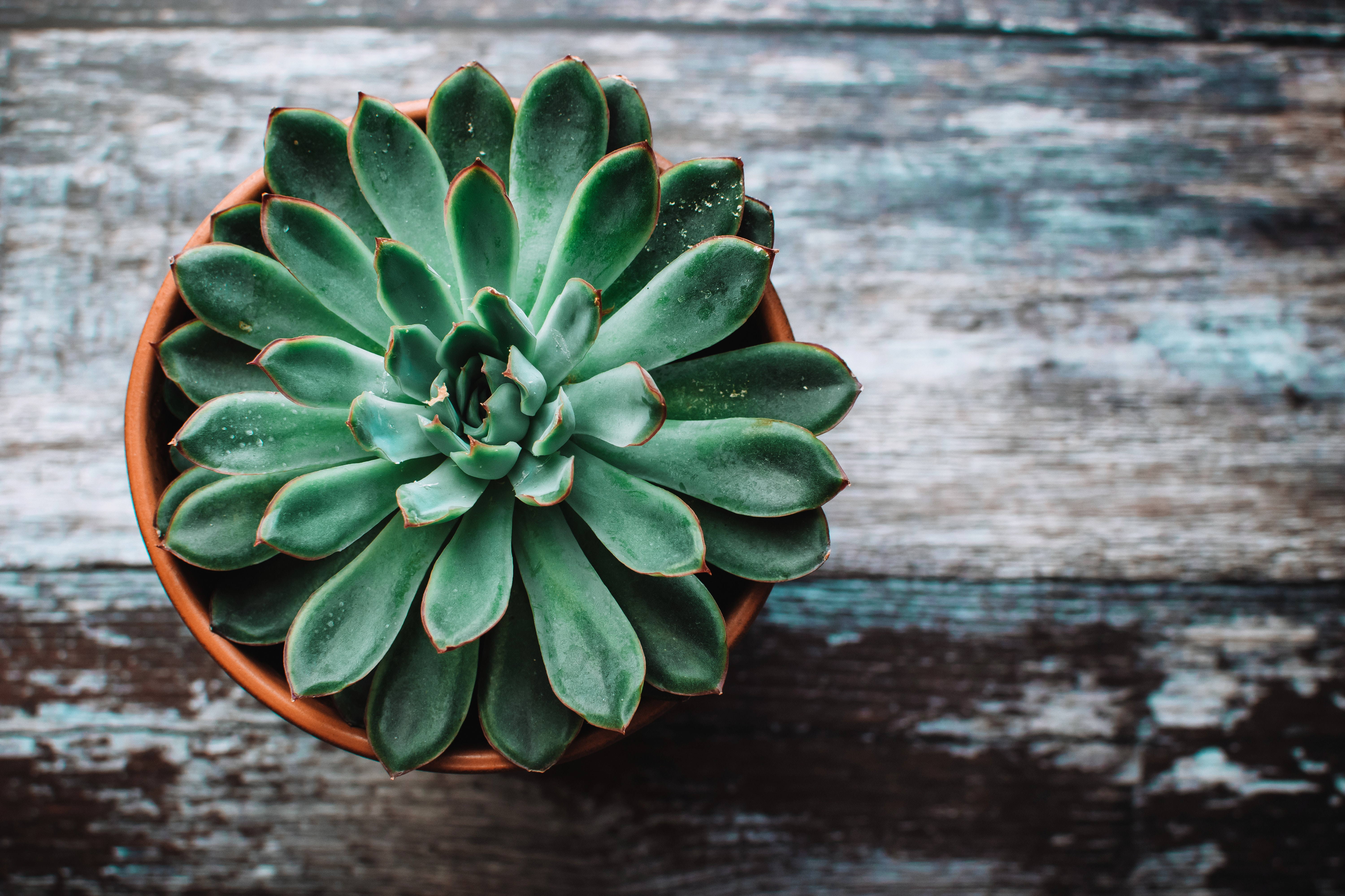 Best Succulent wallpapers for phone screen