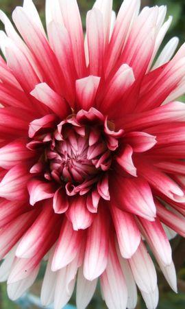 377 скачать обои Растения, Цветы - заставки и картинки бесплатно