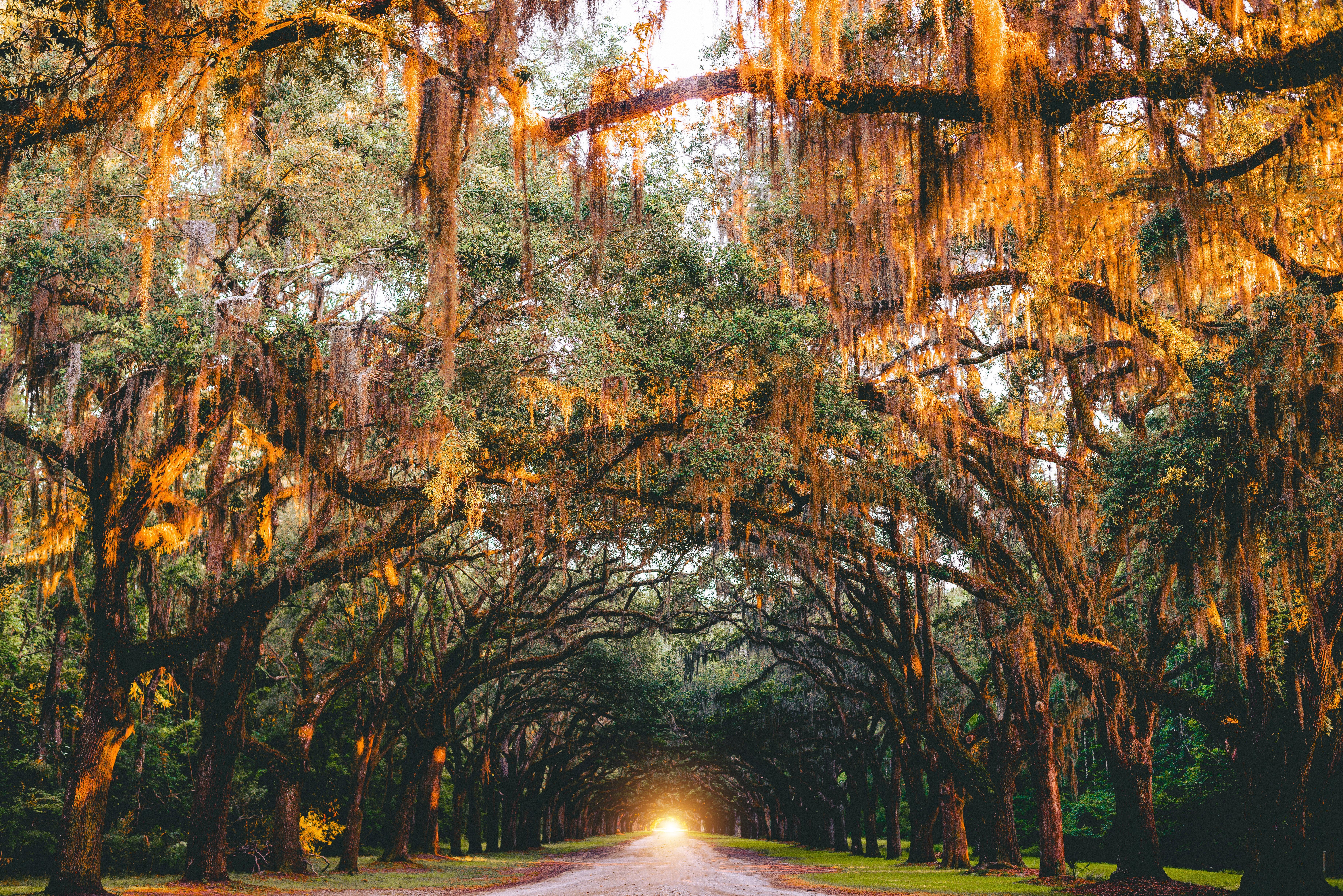 133282壁紙のダウンロード自然, 公園, 木, アーチ, 輝く, 光, 道路, 道, サバンナ, 米国-スクリーンセーバーと写真を無料で