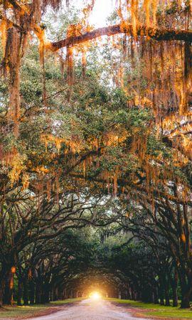 133282 скачать обои Природа, Парк, Деревья, Арка, Свет, Дорога, Саванна, Сша - заставки и картинки бесплатно
