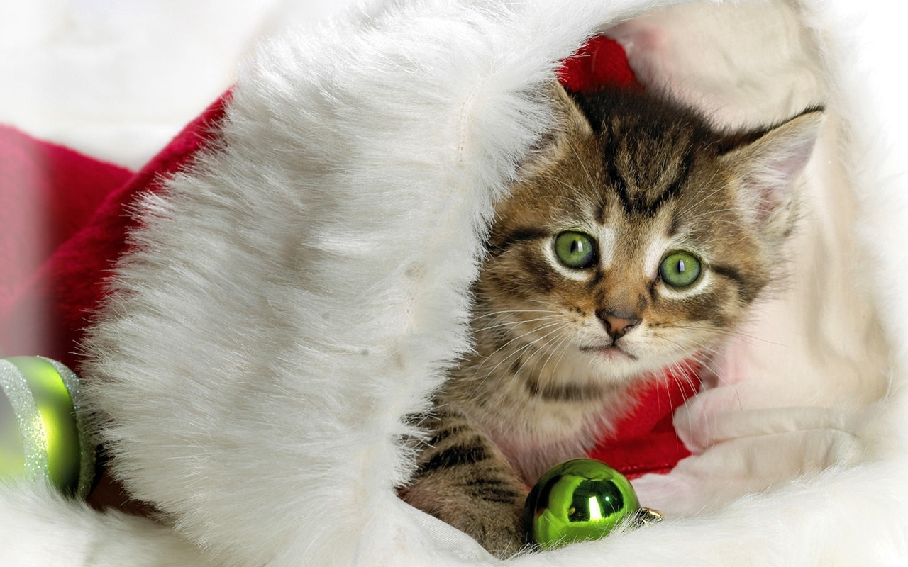 3478 download wallpaper Holidays, Animals, Cats, New Year, Christmas, Xmas screensavers and pictures for free