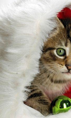3478 descargar fondo de pantalla Vacaciones, Animales, Gatos, Año Nuevo, Navidad: protectores de pantalla e imágenes gratis