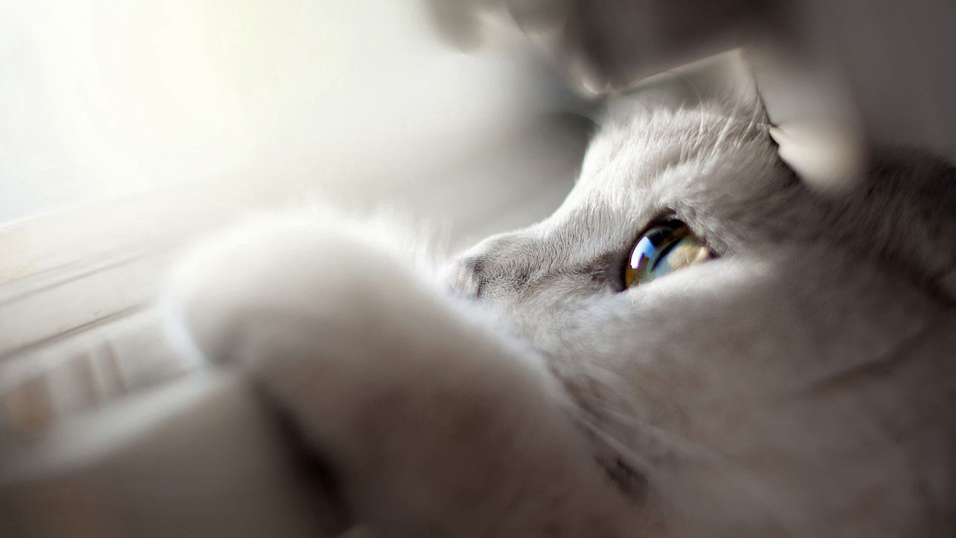 70008 download wallpaper Animals, Cat, Muzzle, Eyes, Paw, Peek Out, Look Out screensavers and pictures for free