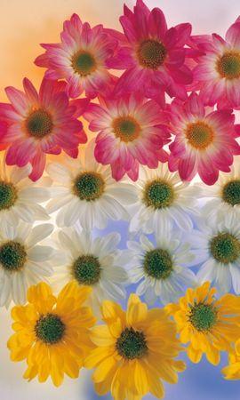 6928 скачать обои Растения, Цветы - заставки и картинки бесплатно