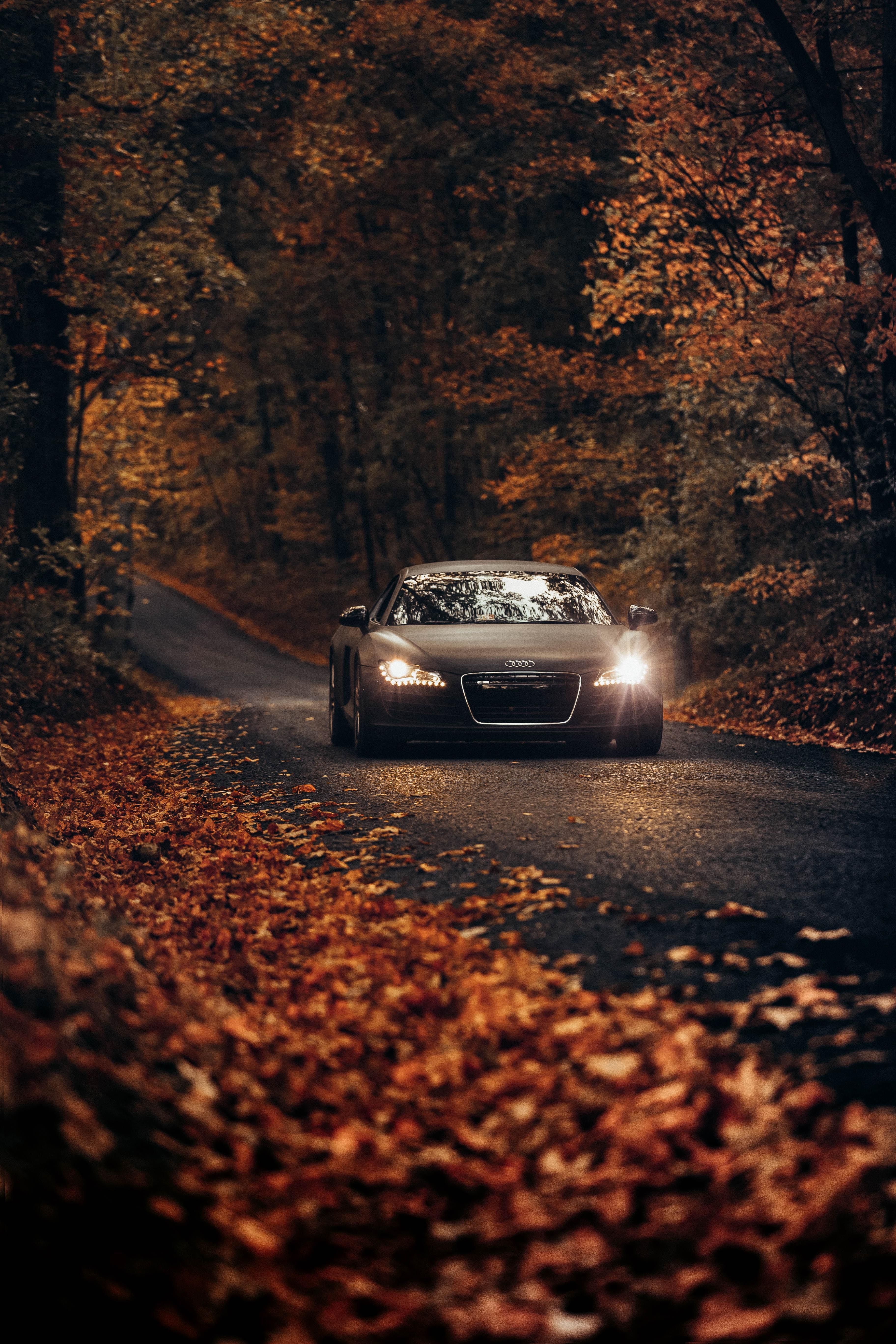 122388 скачать обои Осень, Ауди (Audi), Асфальт, Дорога, Движение, Тачки (Cars), Audi Tt - заставки и картинки бесплатно