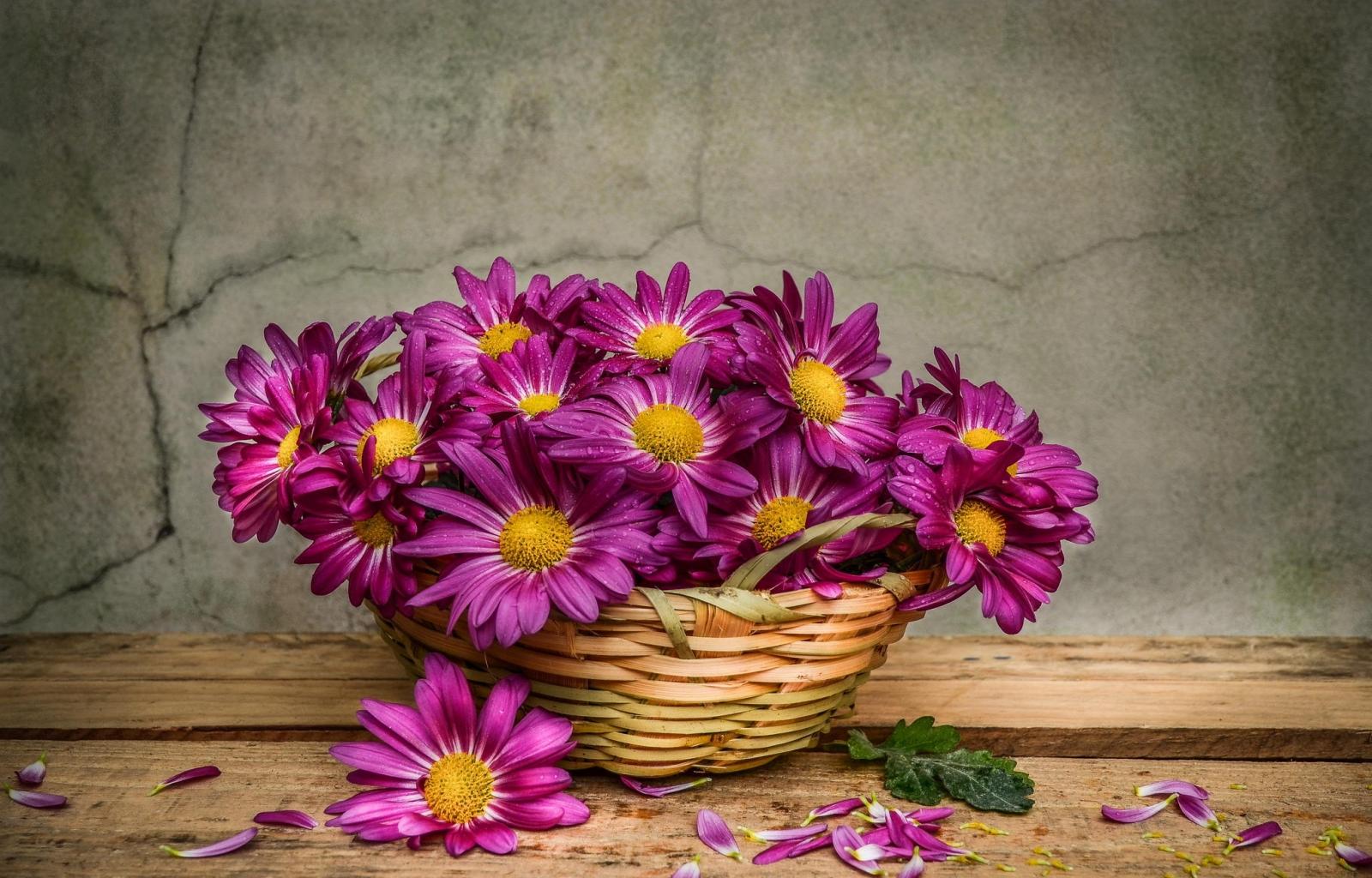 37327 скачать обои Растения, Цветы, Букеты - заставки и картинки бесплатно