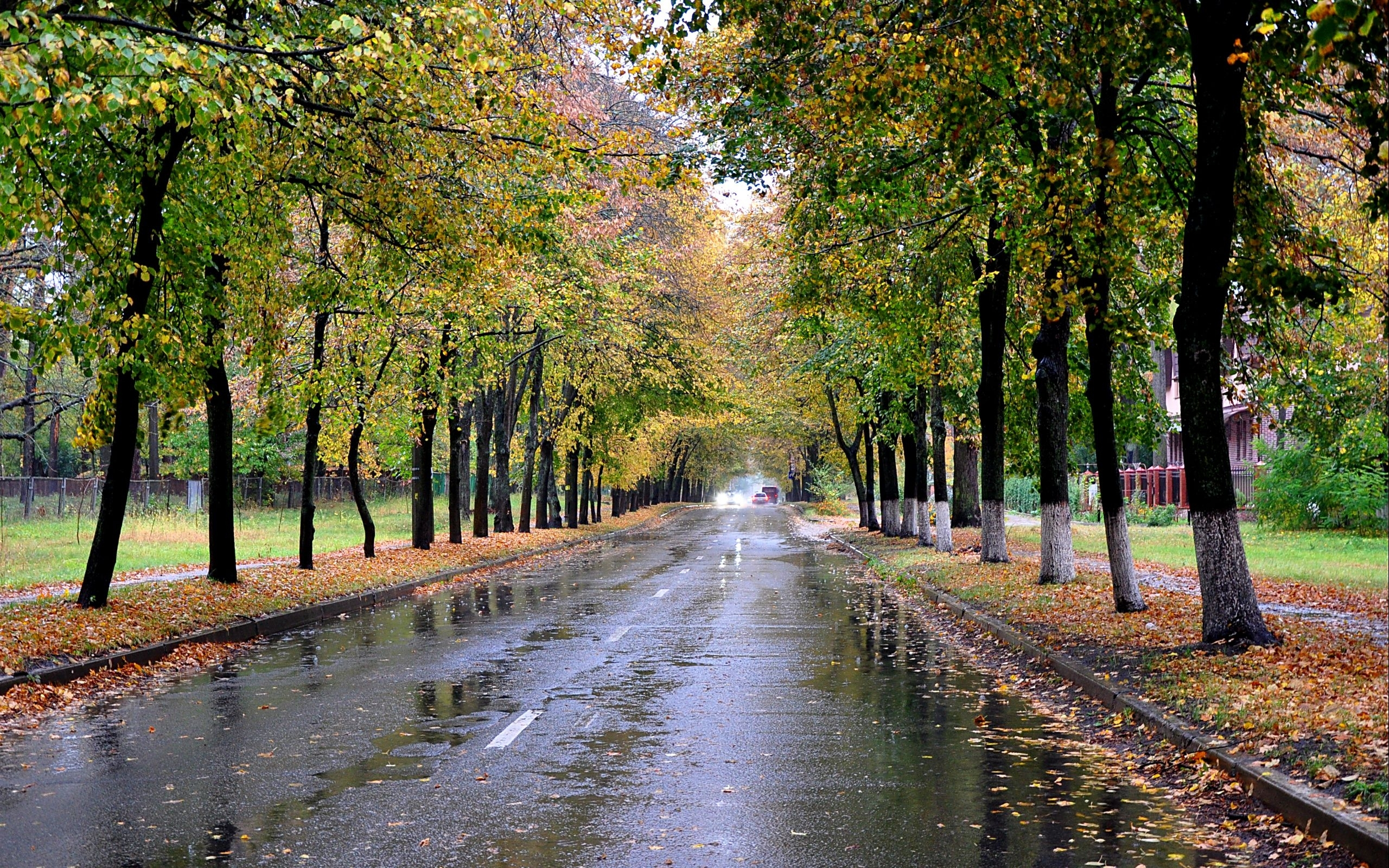 27953 download wallpaper Landscape, Trees, Roads, Autumn screensavers and pictures for free