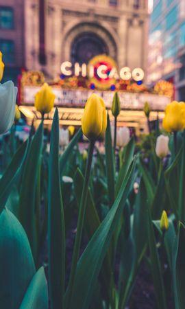 134236 télécharger le fond d'écran Fleurs, Parterre De Fleurs, Parterre, Floraison, Tulipes - économiseurs d'écran et images gratuitement