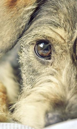 87405 download wallpaper Animals, Puppy, Dog, Muzzle, Eyes screensavers and pictures for free