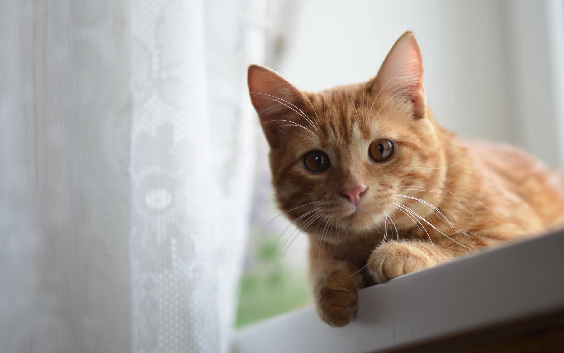 84845 download wallpaper Animals, Cat, Muzzle, Sight, Opinion, Redhead screensavers and pictures for free