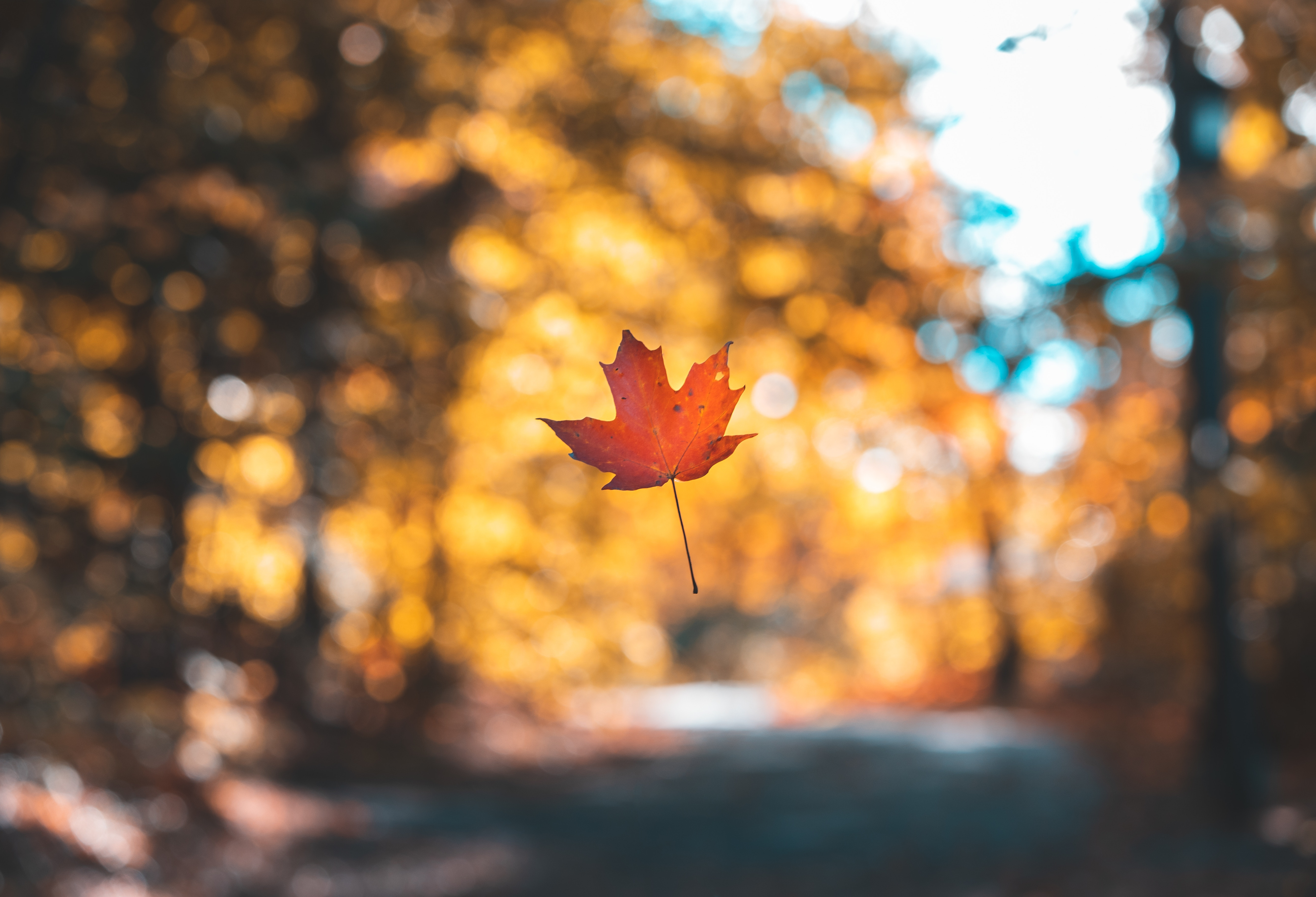 116840 download wallpaper Nature, Sheet, Leaf, Maple, Autumn, Levitation, Blur, Smooth screensavers and pictures for free