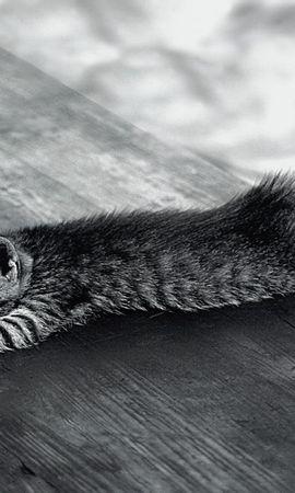 3649 descargar fondo de pantalla Animales, Gatos: protectores de pantalla e imágenes gratis